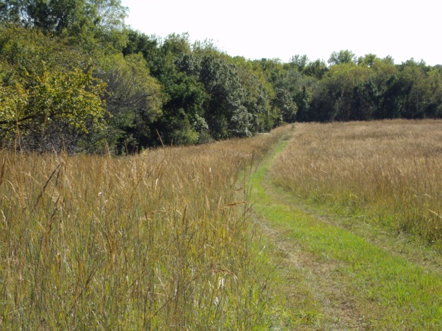 Driveway through the tall grass prairie
